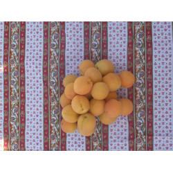abricot kg