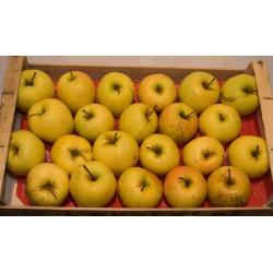 Pomme Golden,  Plateau 4.5...