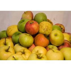 Pommes mélangées au plateau