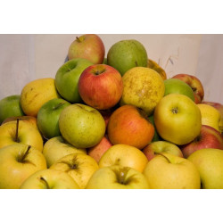 Pommes Golden à la caisse