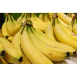 Banane des Antilles Françaises